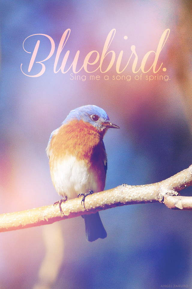 bluebird.